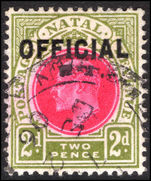 Natal 1904 2d official fine used.
